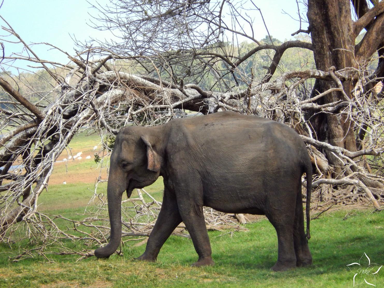 preco nejazdit na slonoch