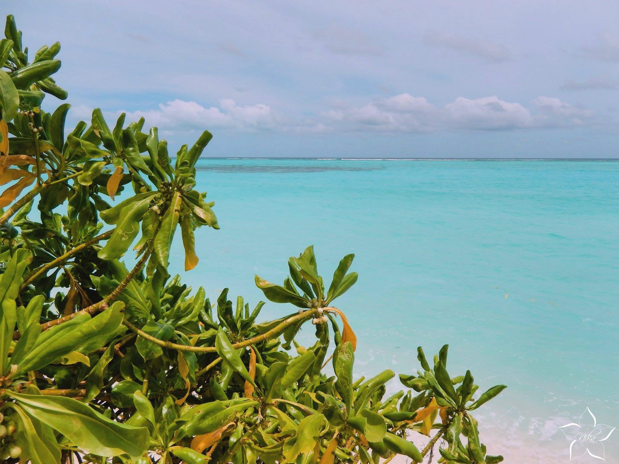 maldivske plaze ostrov thoddoo
