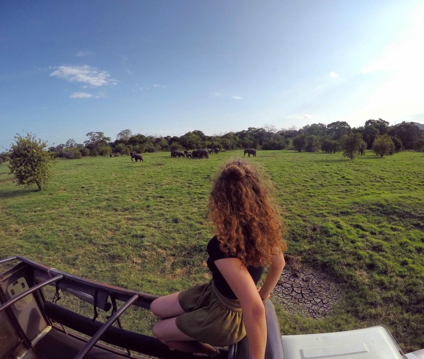 Sri Lanka Minneriya jeep slonie stado
