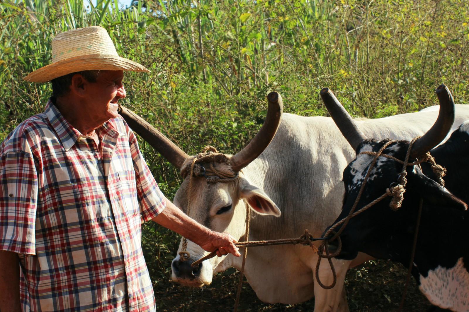 Farmár poľnohospodárstvo na Kube