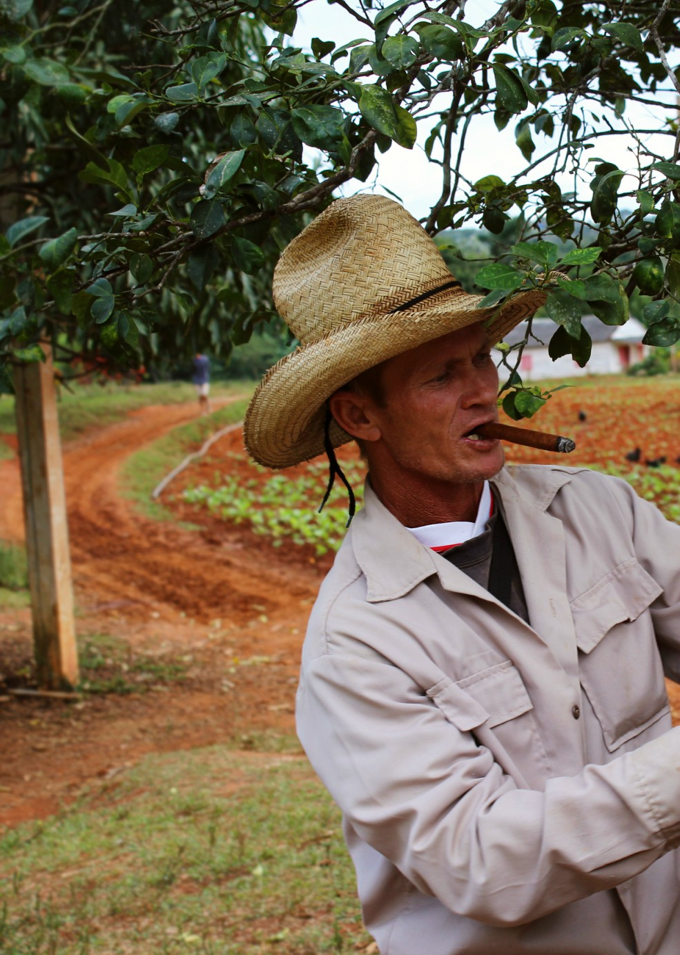 Viñales - Kuba tabakové plantáže