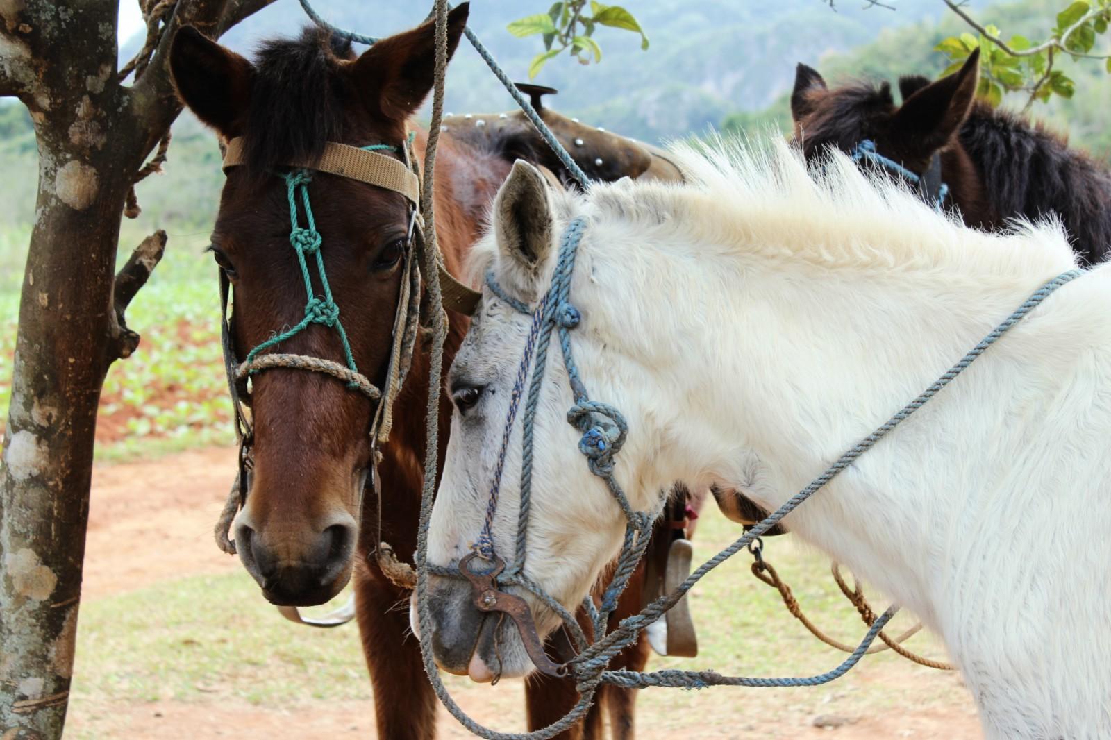 Výlet na koňoch Viñales - západná Kuba