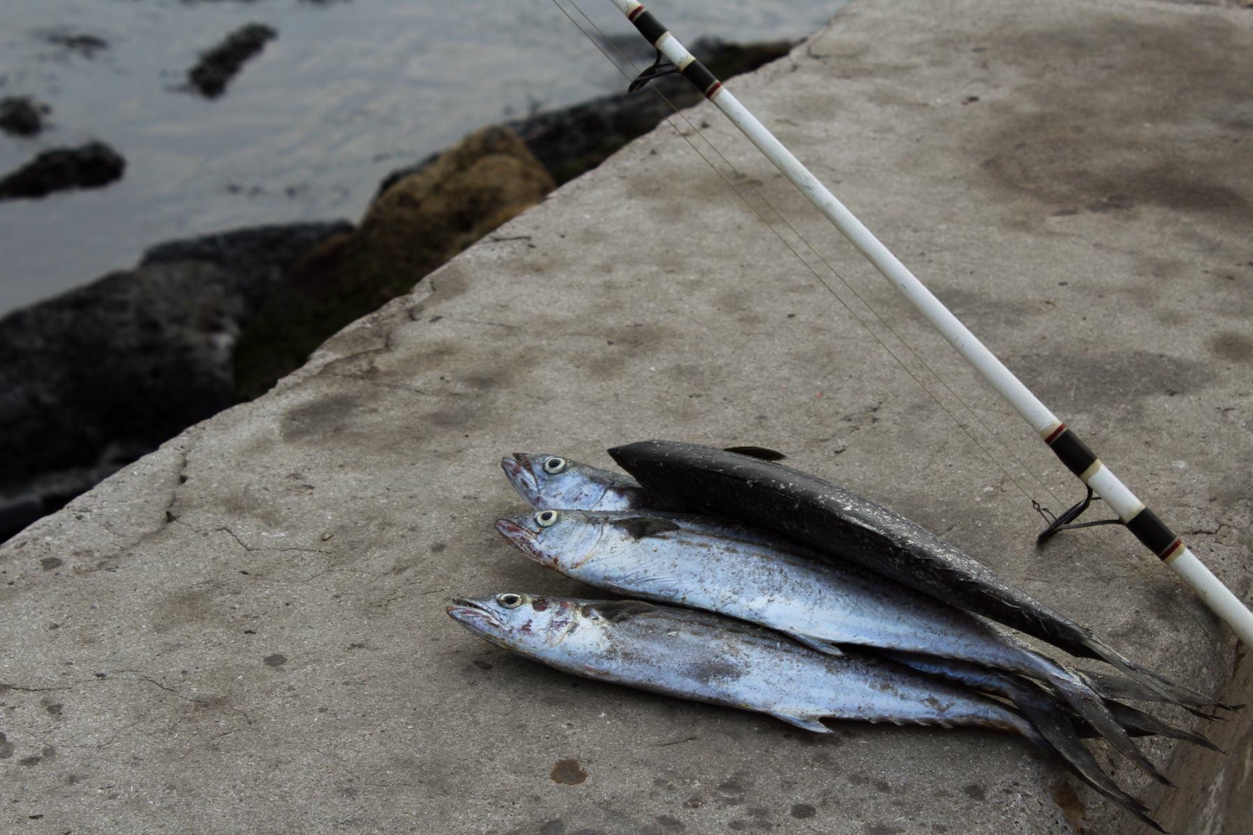 Hlavné mesto Kuby - Havana vylovené ryby