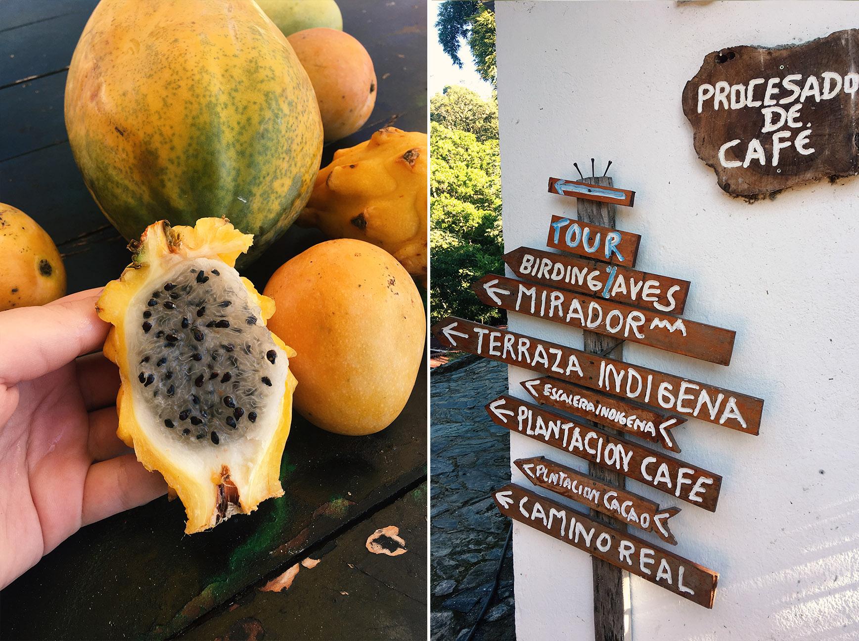 Pestovanie kakaa a kávy v Kolumbii - Finca San Rafael