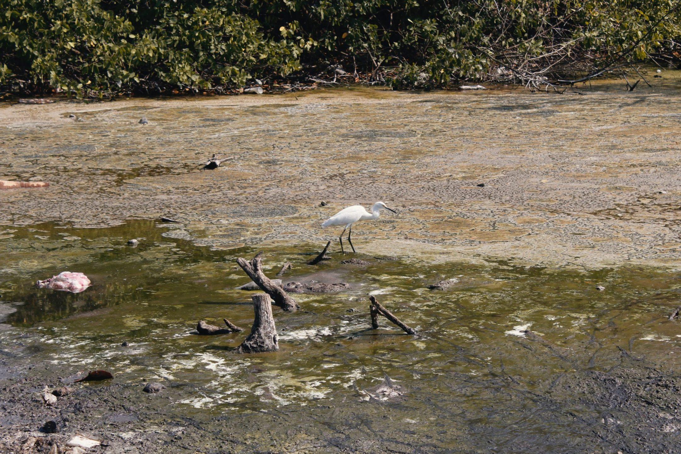 Výlet z Cartageny na Isla Barú a Playa Blanca - recenzia